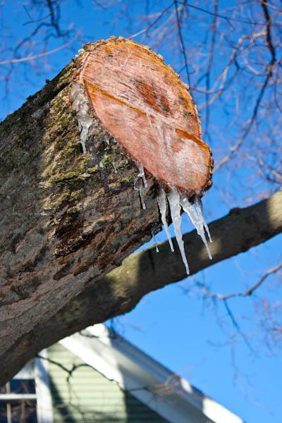 Frozen sap
